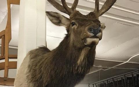 Hunting Elk Deer Sportsman